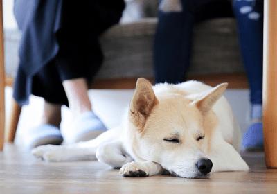 犬好きの副業!ドッグホスト でワンワンの輪が、広がります。