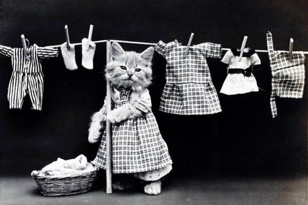 プロから学ぶ3つの洗濯術!部屋干しのお悩みも解決…