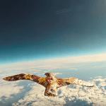 capture de l'oiseau dans le clip de Laurent Lamarca