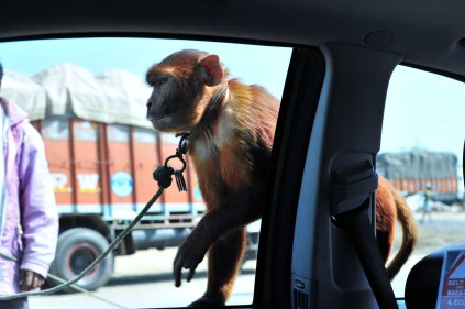 A monkey jumped on our window2 Comments