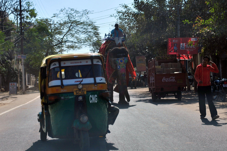 Elephant walking down street