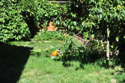 Jen's backyard