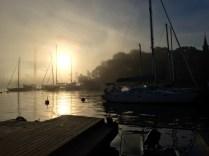 Sun coming through the fog