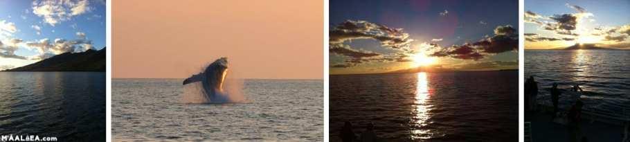 Maui sunset cruises