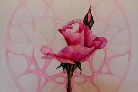 Rose Roos 1