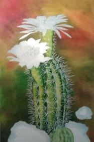 Cactus 9
