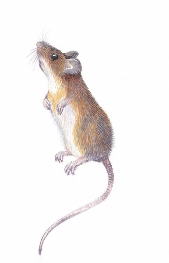hiired 4