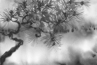 Pinetree 3