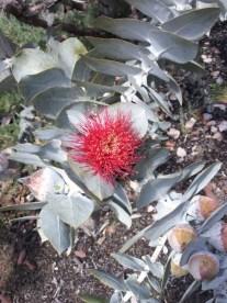gum-blossom