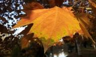 leaf-mudgee-may