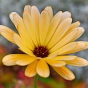 keltainenkukka2