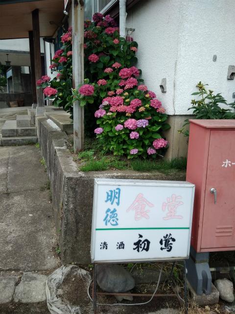 須坂明徳食堂の紫陽花