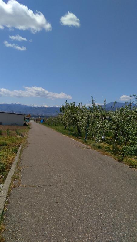 リンゴ畑サイクリング