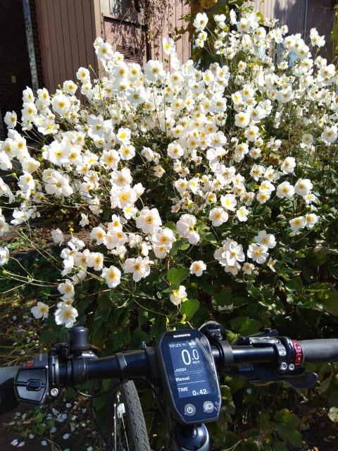 Ebikeと花