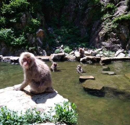 長野に来たらココ!世界で唯一温泉に入るお猿、スノーモンキー maaruから2-3時間