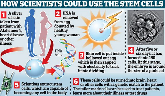 http://www.dailymail.co.uk/sciencetech/article-2324970/New-spectre-cloned-babies-Scientists-create-embryos-lab-grow-term.html