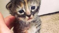 飼い主のアシュリーさんは、この子猫のことを「one Purrmanently Sad Cat」と呼んでいる。 Purrmanentlyはたぶん、PureとPermanentlyをかけている。Permanen […]