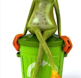 צפרדע פוליטית