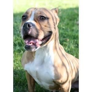Nifty Dachshund Champion Side Notice Over Bulldog Pronounced