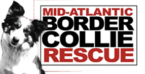 Mid-Atlantic Border Collie Rescue