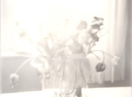 Polaroid Bild mit welken Tulpen schwarzweiß