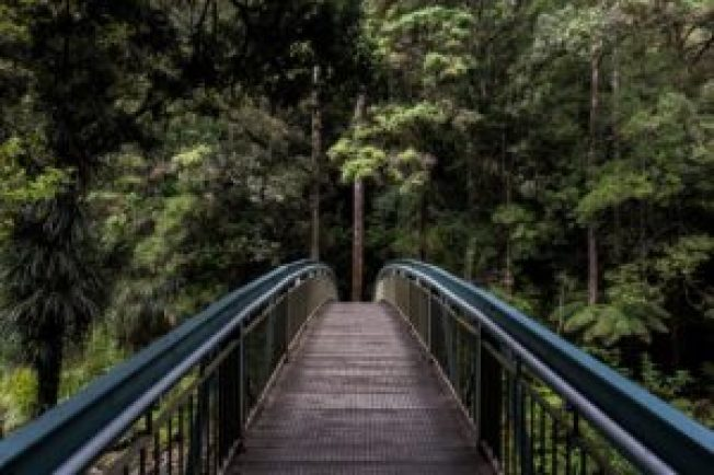 Photograph of a bridge in a rainforest.