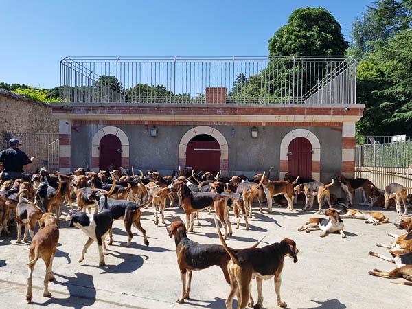 Château de Cheverny - Soupe des chiens