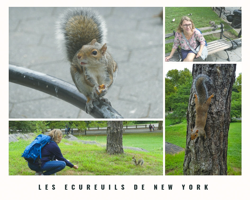Incontournables à New York - les parcs de Manhattan