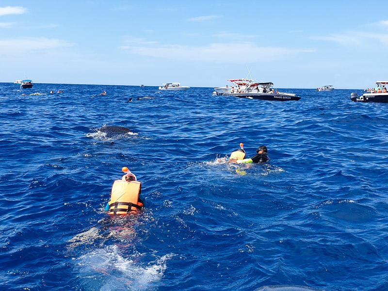 Nager avec les requins baleine au Mexique