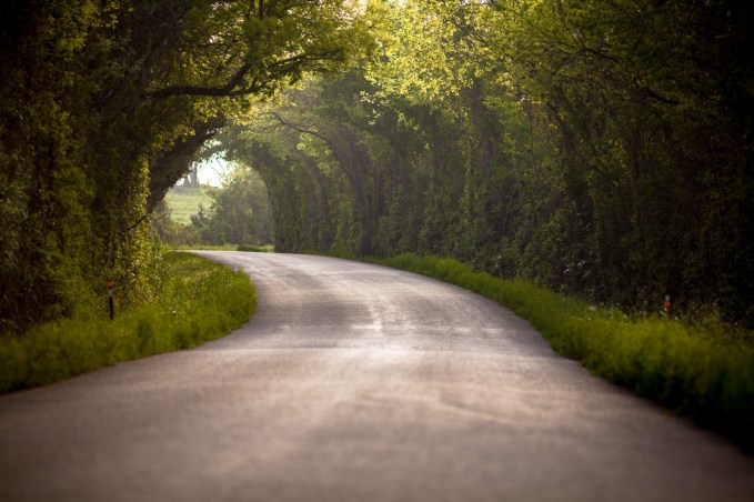 Forest-Tunnel-In-Chappell-Hill-Texas-Mabry-Campbell