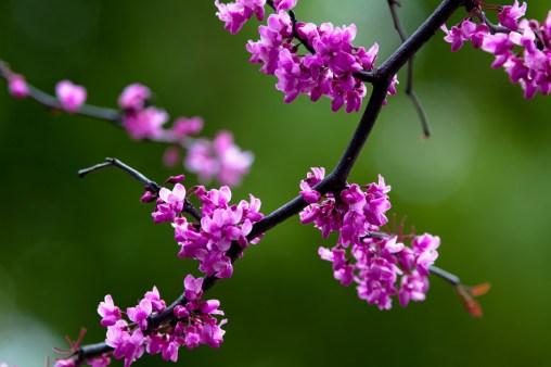 Purple Minis - Mabry Campbell