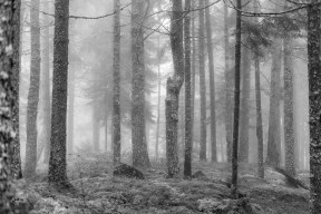 Maine-Forest-Fog-Mabry-Campbell