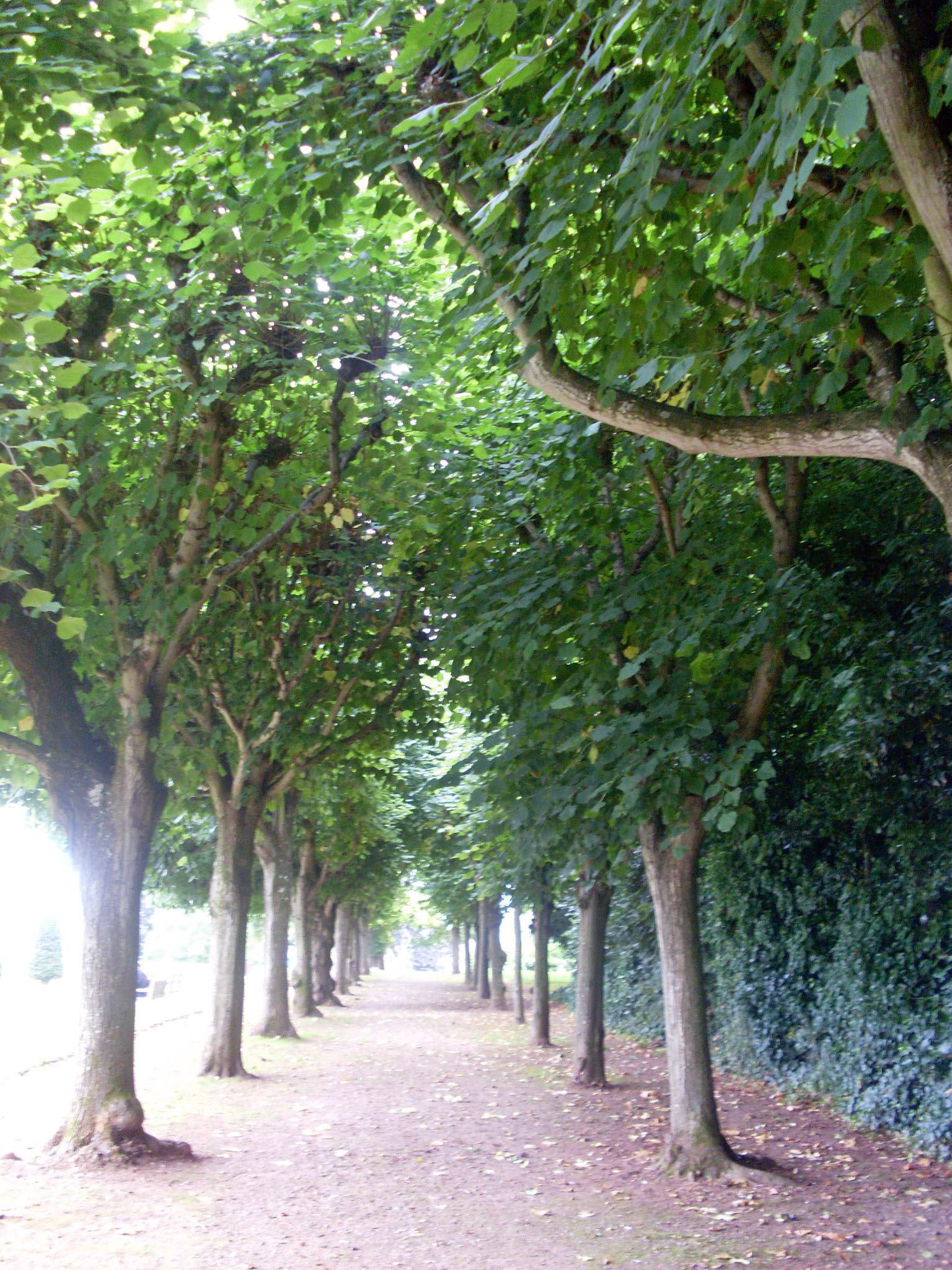 garden pa rin