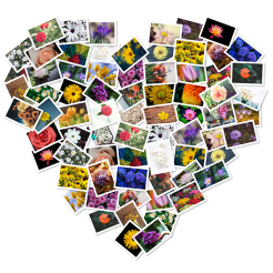 FigrCollage icon