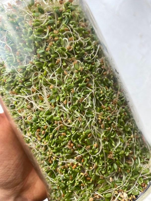 cómo germinar semillas