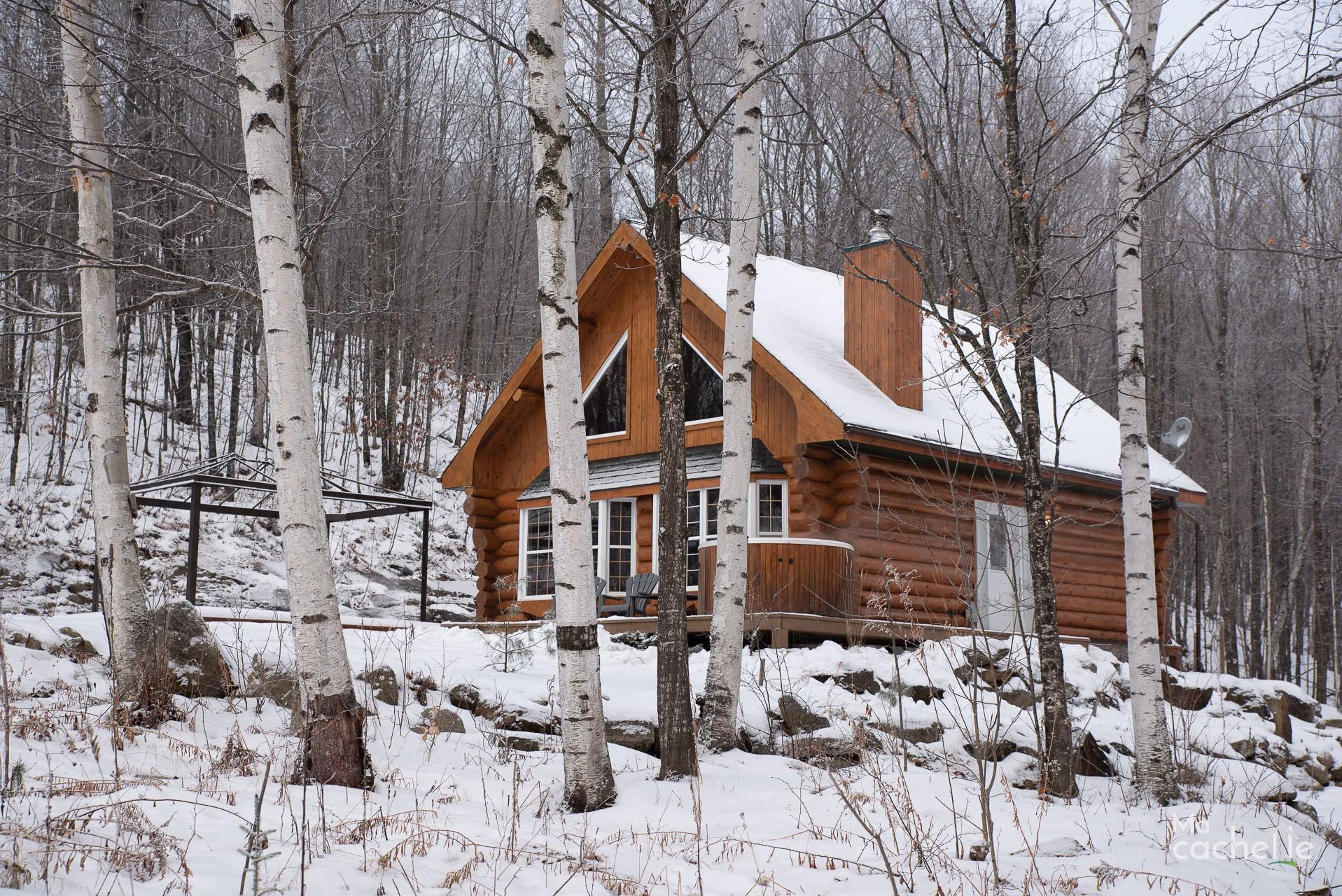 Petit Domaine forêt d'eau - Chalet bois rond à louer au Lac Simon - Terrain boisé de bouleaux