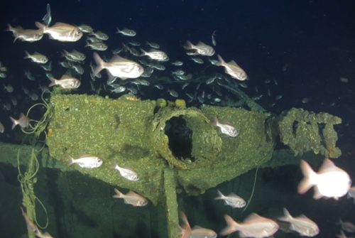 In this April 14, 2014 image from video provided by Definitive Productions, fish swim around the mast of the underwater shipwreck S.S. Ventnor near Whangarei, off the northern New Zealand coast
