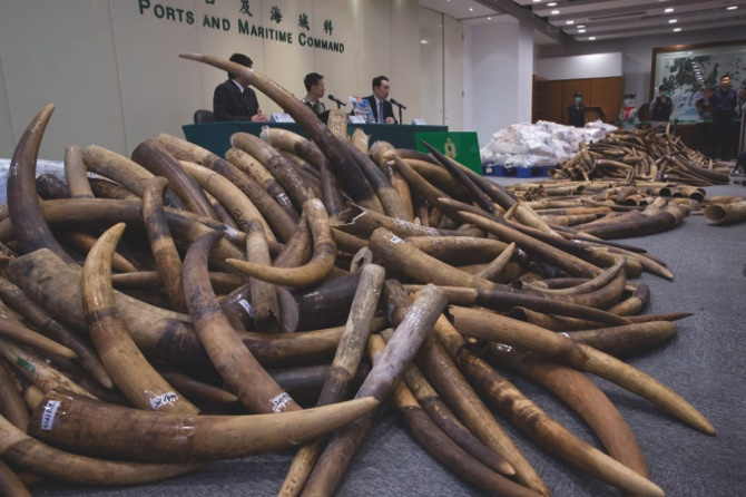 The Buzz | HK seizes USD9m worth of ivory in Malaysia shipment