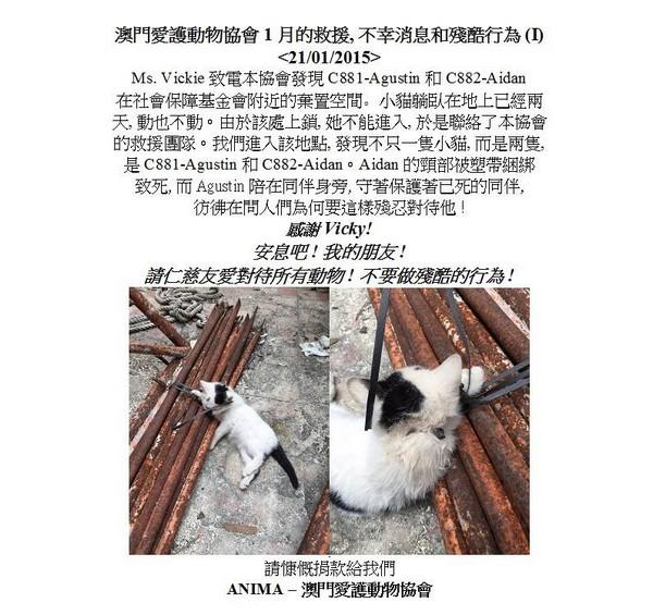 Kitten killed with plastic scaffolding ties