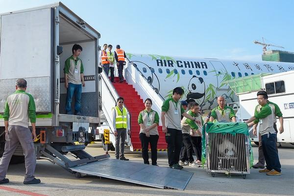 New panda pair starts 30-day quarantine in Coloane