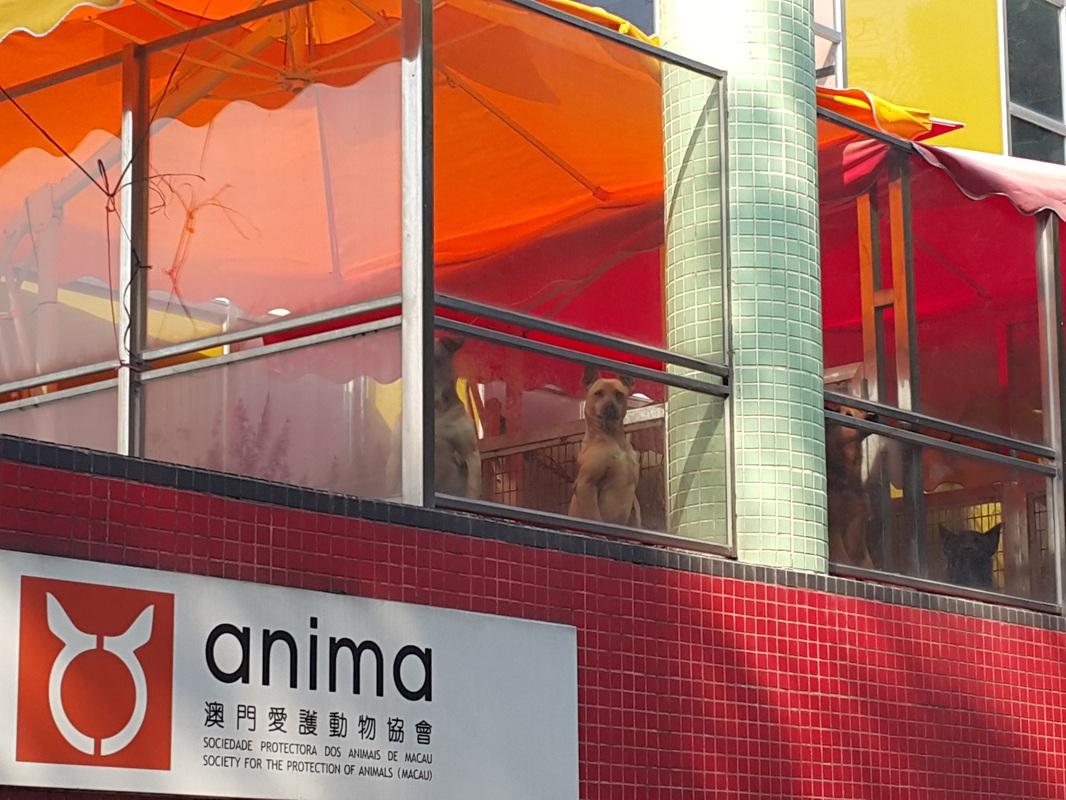 Anima plans sending Macau's greyhounds to Portugal