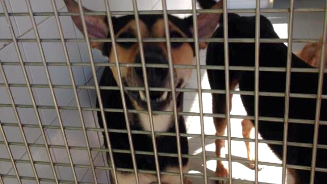 IAM opposes capture-neuter-release strategy for strays