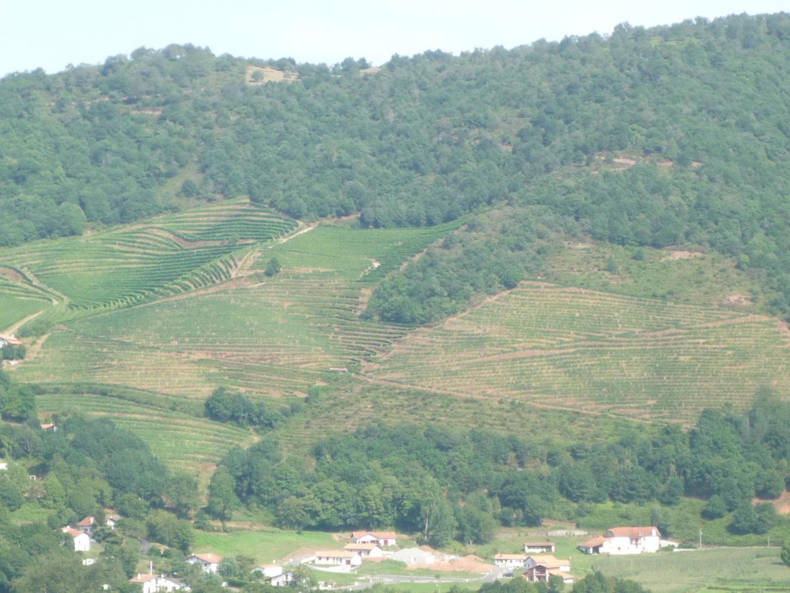 Vignoble de la toute petite appellation de 250h d'Irouléguy