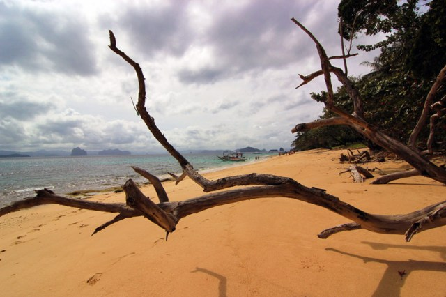Branches and beaches, El Nido