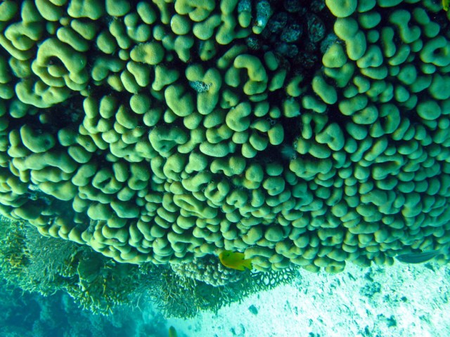 Upside down brain coral. Looks even more like a brain