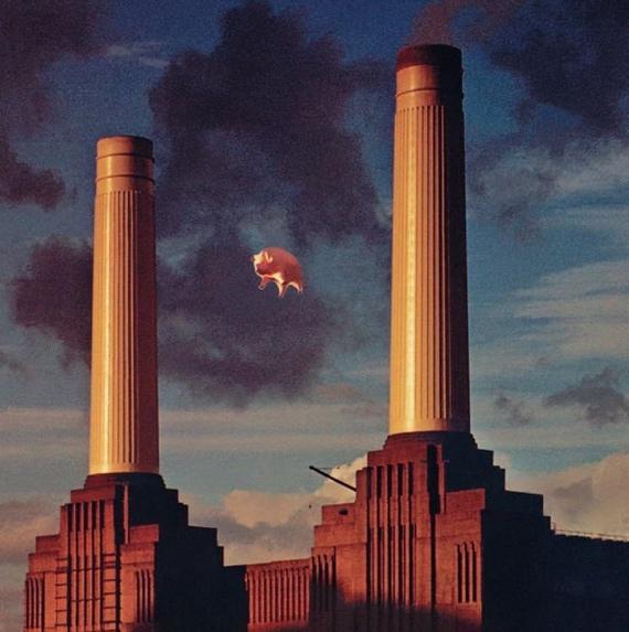 Pink Floyd Animals - Algie the pig