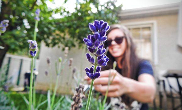 woman, lavender