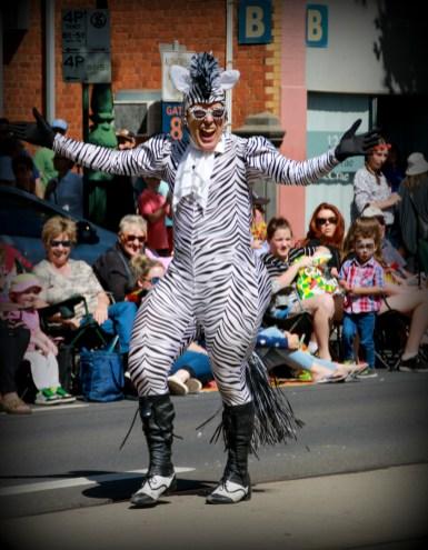 40. 2018_teawamutu_a008_open_zebra man performs