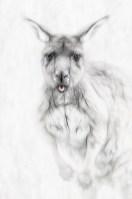 iconicaustralia_kangaroo