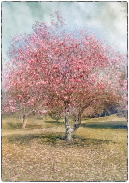 open003. magnolia compound